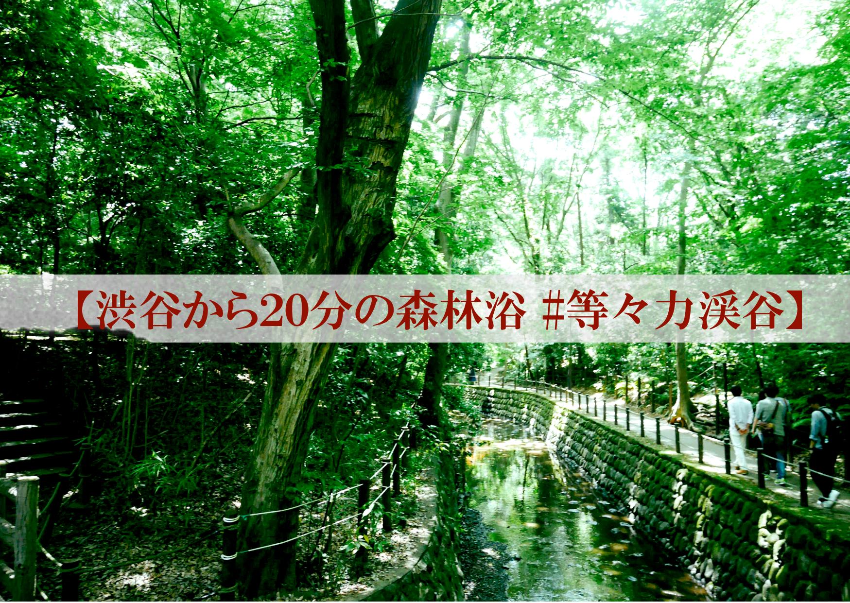 【渋谷から20分の森林浴 #等々力渓谷】
